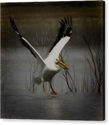 American White Pelican Da Square Canvas Print by Ernie Echols