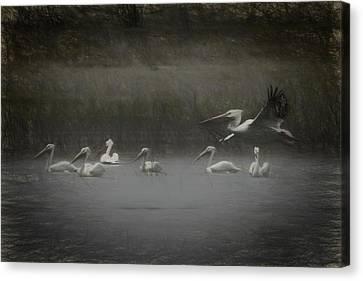American White Pelicans Da Canvas Print by Ernie Echols