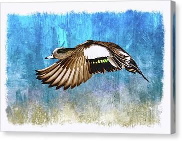 American Widgeon Drake Canvas Print