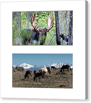 American Wild Animals Horses Mustangs Moose Deer Canvas Print by Navin Joshi