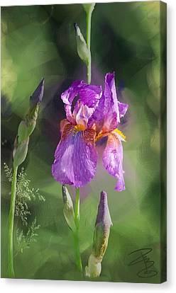 Amethyst Iris 2 Canvas Print by Debra Baldwin
