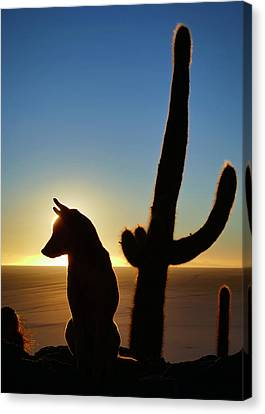 Canvas Print featuring the photograph Amigo by Skip Hunt