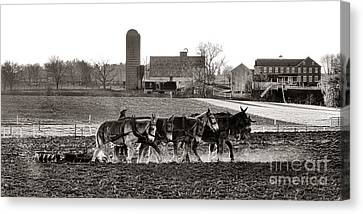 Amish Agriculture  Canvas Print by Olivier Le Queinec
