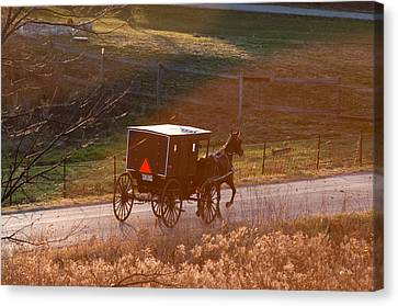 Amish Buggy Afternoon Sun Canvas Print