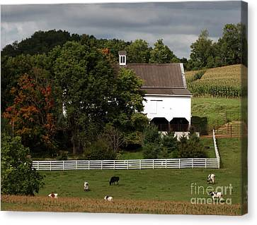 Amish Farm In The Fall Canvas Print by Gena Weiser