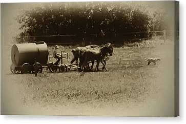 Amish Farmer - Lancaster County Pa. Canvas Print by Bill Cannon