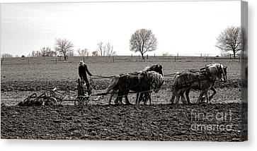 Amish Farming Canvas Print by Olivier Le Queinec