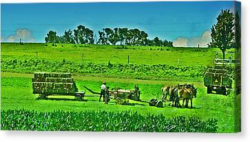 Amish Gathering Hay Canvas Print by Bill Cannon
