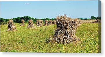 Canvas Print featuring the photograph Amish Harvest by Cricket Hackmann