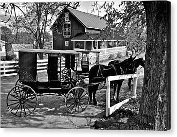 Amish Horse And Buggy In Black And White Canvas Print by Frozen in Time Fine Art Photography