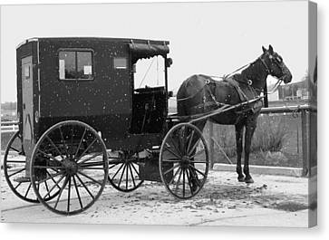 Amish Horse And Buggy In Snow Black And White Canvas Print by Dan Sproul