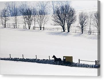 Old Country Roads Canvas Print - Amish Horse And Buggy In Snowy Landscape by Jeremy Woodhouse