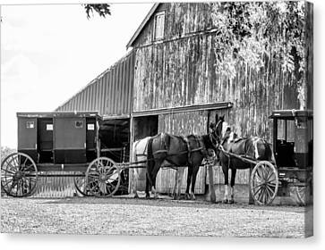 Amish Horse And Wagon Canvas Print by Henry Fitzthum