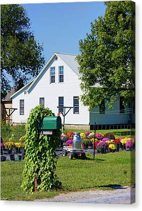 Amish House With Mums Canvas Print by Cricket Hackmann