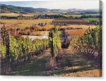 Amity Vineyard And Farmlands Canvas Print