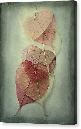 Fall Leaves Canvas Print - Among Shades by Maggie Terlecki