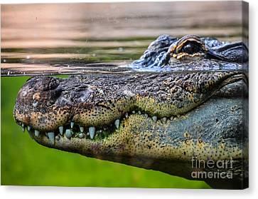 Amphibian Prehistoric Crocodile Canvas Print