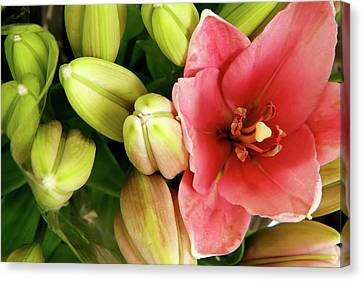 Canvas Print featuring the photograph Amsterdam Buds by KG Thienemann