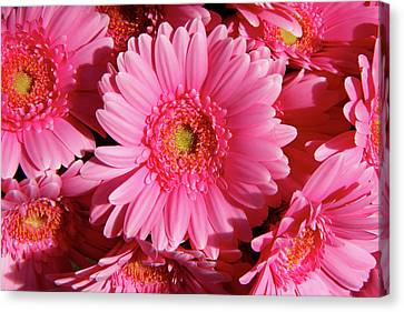 Canvas Print featuring the photograph Amsterdam In Pink by KG Thienemann