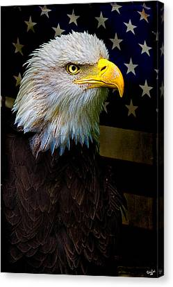 Eagle Canvas Print - An American Icon by Chris Lord