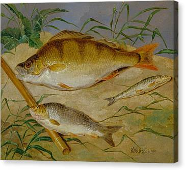 An Angler's Catch Of Coarse Fish Canvas Print by Dean Wolstenholme