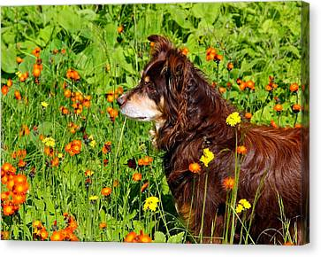 Canvas Print featuring the photograph An Aussie's Thoughtful Moment by Debbie Oppermann