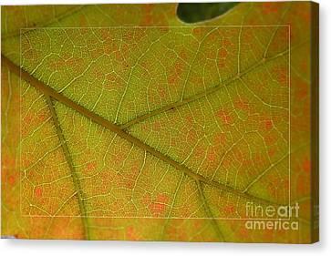 Canvas Print featuring the photograph An Autumn Leaf by Jean Bernard Roussilhe