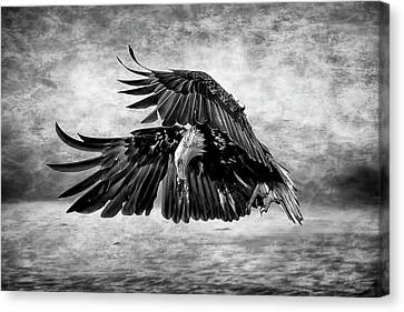 An Eagles Quest Canvas Print by Wes and Dotty Weber