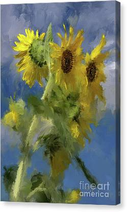 Canvas Print featuring the photograph An Impression Of Sunflowers In The Sun by Lois Bryan