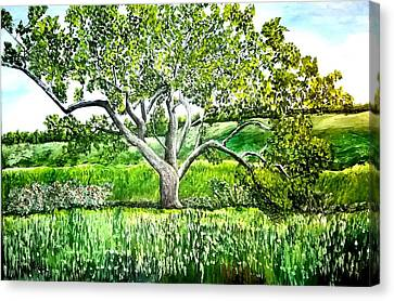 An Oak Tree In Malibu State Park Canvas Print