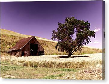 An Old Barn And A Tree Canvas Print