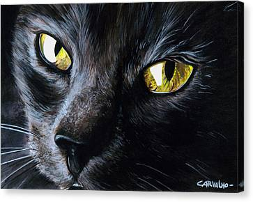 An Old Friend Canvas Print by Daniel Carvalho