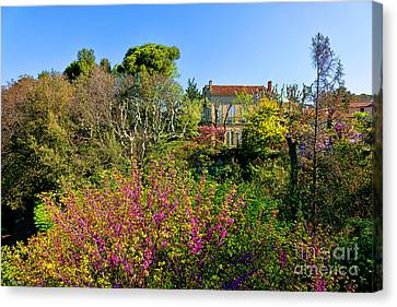 An Old House In Provence Canvas Print by Olivier Le Queinec