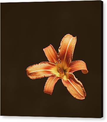 An Orange Lily Canvas Print by Scott Norris