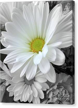 An Outstanding Daisy Canvas Print by Susan Lafleur