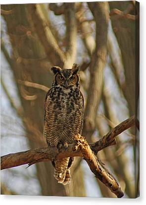 An Owl Canvas Print by Raymond Salani III