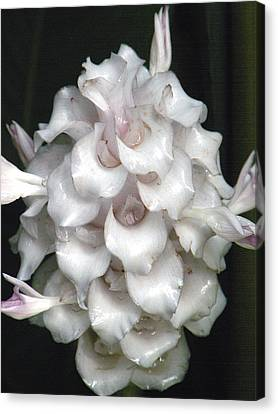 An Unusual Orchid Canvas Print by Rosalie Scanlon