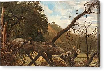 An Uprooted Tree Canvas Print by Celestial Images