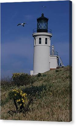 Anacapa Lighthouse And Western Gulls Canvas Print by Don Kreuter
