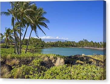 Anaehoomalu Bay Canvas Print by Ron Dahlquist - Printscapes