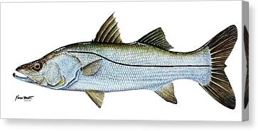 Anatomical Snook Canvas Print by Kevin Brant