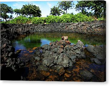 Canvas Print featuring the photograph Anchialine Pond by Anthony Jones