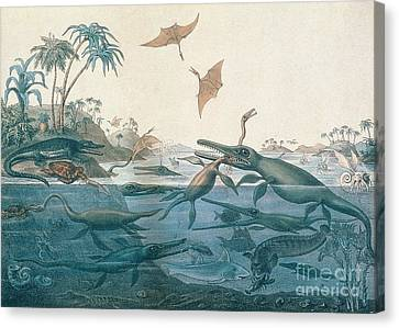 Sea Birds Canvas Print - Ancient Dorset by Henry Thomas De La Beche