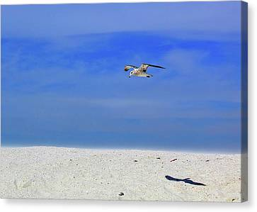 Canvas Print featuring the photograph Ancient Mariner by Marie Hicks