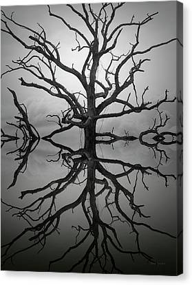 Ancient Oak Tree Montage Canvas Print by Dave Gordon