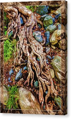 Ancient Sycamore Roots Canvas Print by ABeautifulSky Photography
