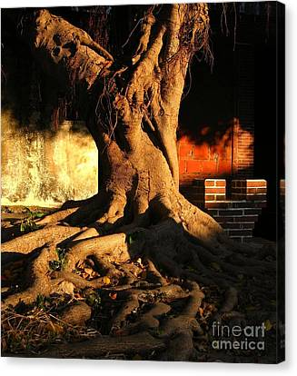 Ancient Tree In A Chinese Courtyard Canvas Print by Yali Shi