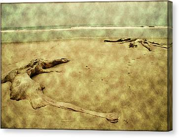 Ancient Tree Roots Canvas Print by Bonnie Bruno