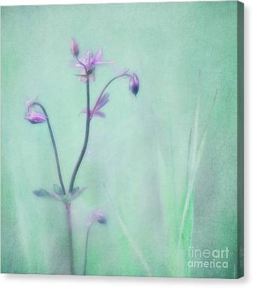 Columbine Canvas Print - And Spring Came by Priska Wettstein