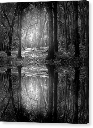 And There Is Light In This Dark Forest Canvas Print by Tara Turner